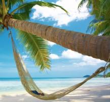 aruba-palme